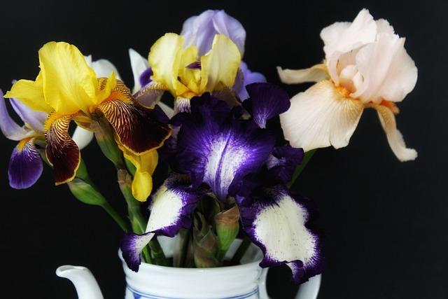 Iris, Schwertliliengewaechs, Vase, Bouquet, Yellow