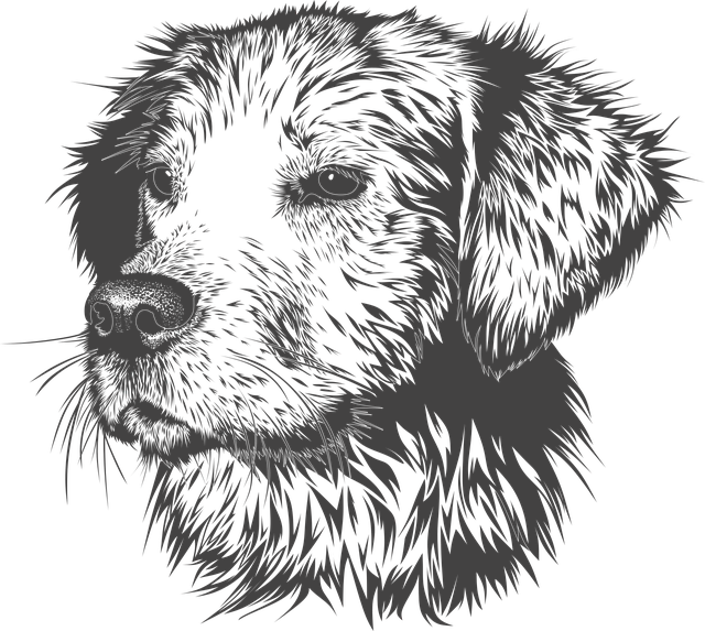 Dog, Animal, Domestic Animal, Doggie, Head, Vector