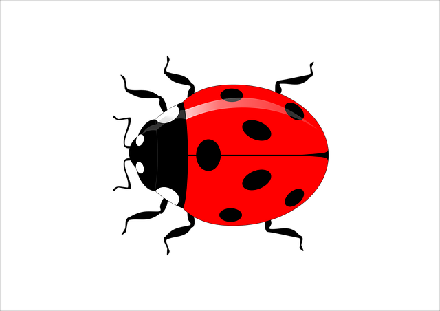 Ladybug, Insect, Vector, Garden, Nature, Red, Spring