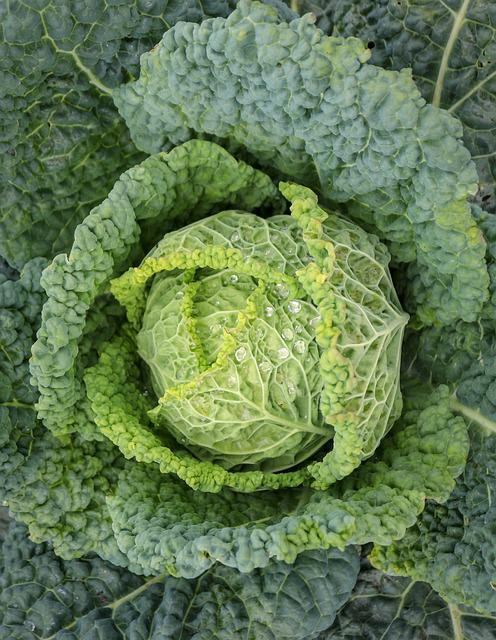 Vegetables, Savoy, Food, Agriculture, Vegan, Nutrition
