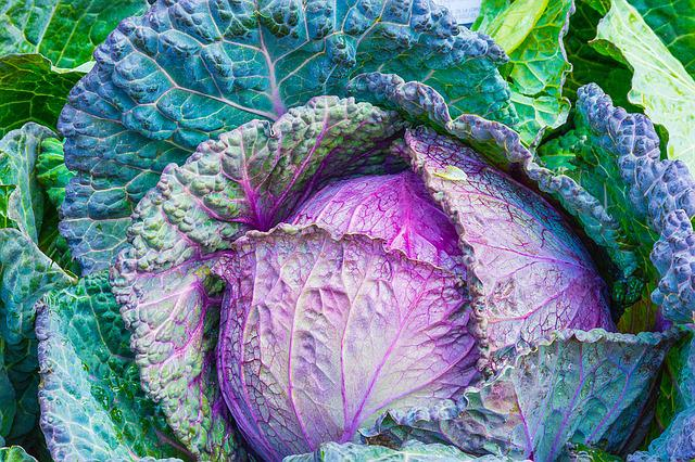 Cabbage, Vegetable, Power, Green, Vegetables, Healthy