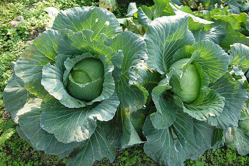 Plant, Leaf, Nature, Vegetable, Food