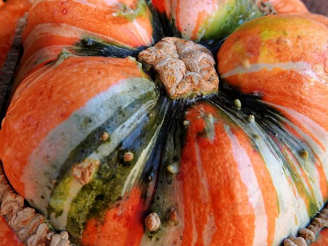 Pumpkin, Gourd, Autumn, Decoration, Vegetables, Harvest