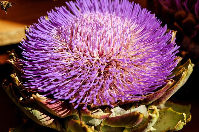 Artichoke, Vegetables, Blossom, Bloom, Flowers, Violet