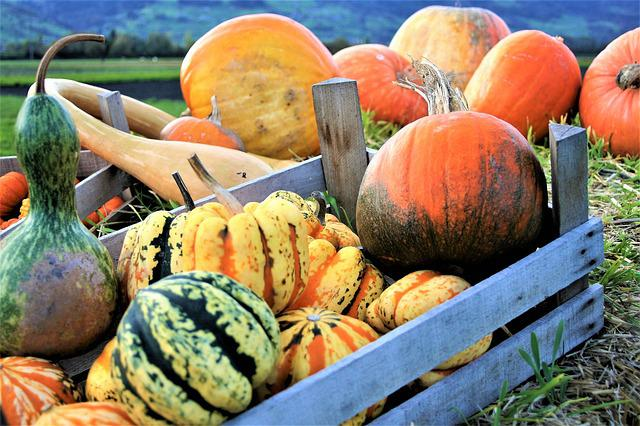 Ornamental Pumpkins, Vegetables, Autumn, Halloween