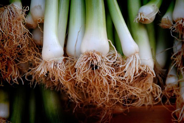 Onions, Leek, Vegetables, Root, Healthy, Spring Onions