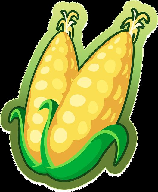 Corn, Maize, Vegetables, Food, Harvest, Organic, Yellow