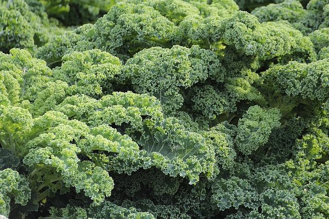 Kale, Vegetables, Brassica Oleracea Var, Sabellica L