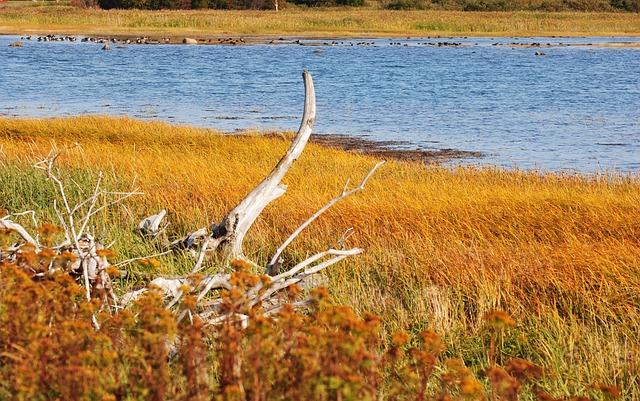 Marsh, Vegetation, Fall, Nature, Tree, Estuary