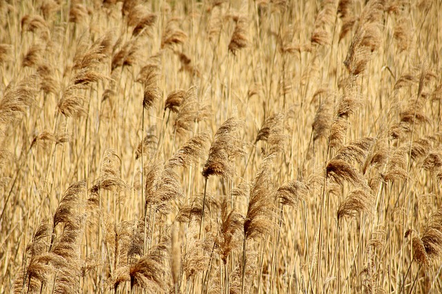Grass, Dry Plants, Vegetation, Nature, The Background