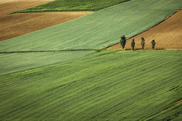Nature, Land, Plains, Plots, Lush, Vegetation, Trees