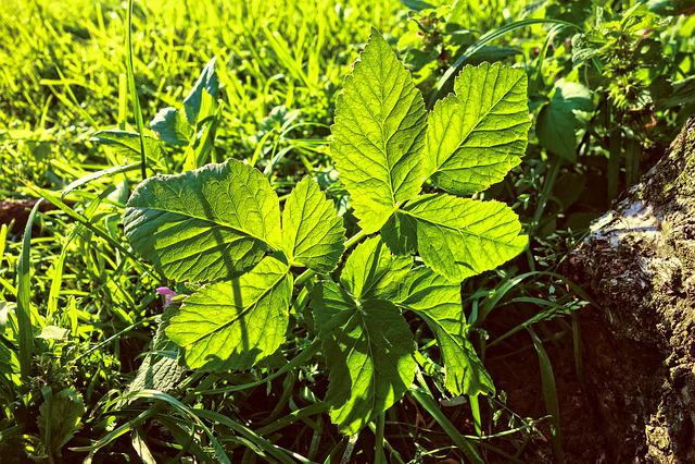 Leaf, Plant, Foliage, Vein, Pattern, Back Light, Grass