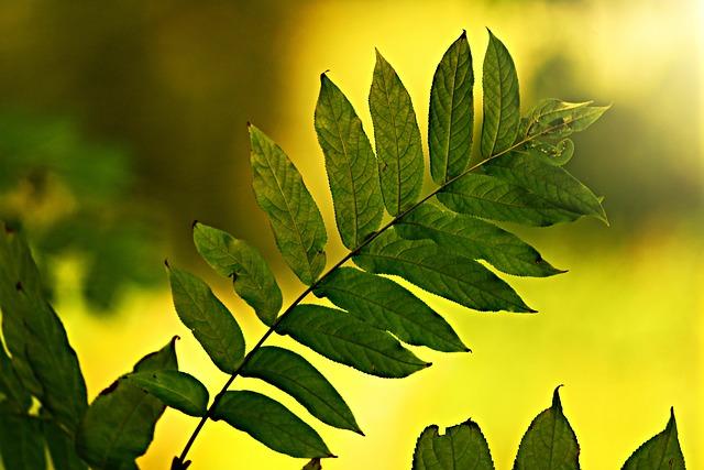 Leaf, Twig, Vein, Pattern, Branch, Bush, Back Light