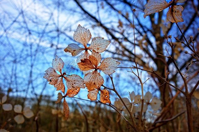 Flower, Plant, Petal, Vein, Pattern, Dried