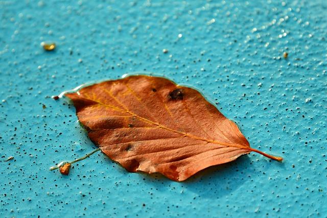 Autumn Leaf, Vein, Pattern, Swimming Pool, Water