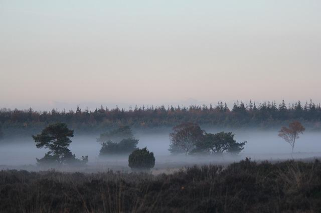 Veluwe, Landscape, Forest, Fog Patches, Netherlands