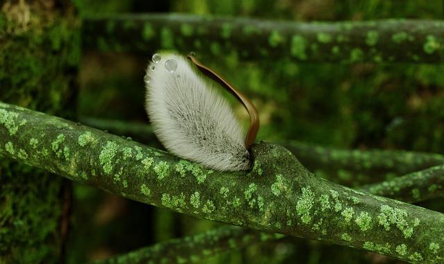 Verba, Forest, Moss, 3d, Green, Drops