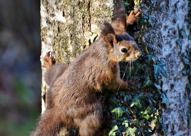 Squirrel, Verifiable Kitten, Rodent, Garden, Forest