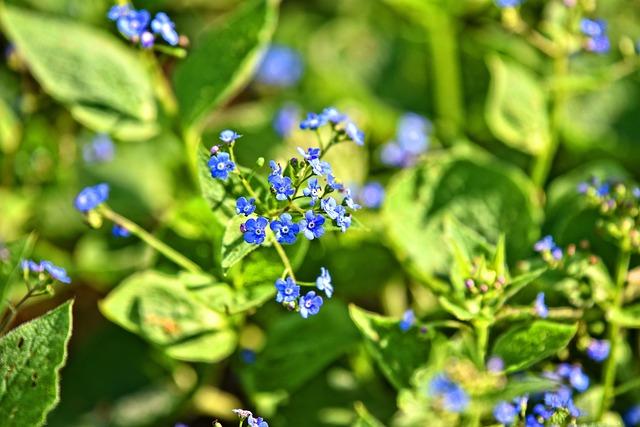 Veronica, Flower, Plant, Bloom, Blossom, Wildflower