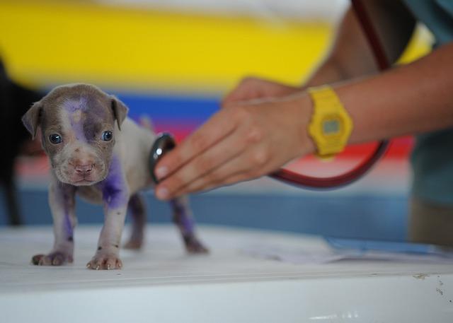 Dog, Puppy, Canine, Vet, Veterinarian, Medical Care