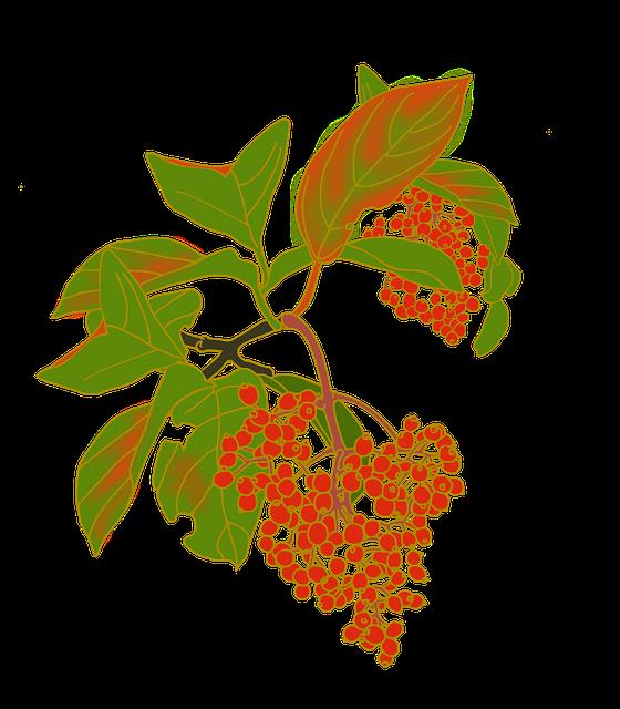 Nuts, Red Fruit, Viburnum, Viburnum Odoratissimum