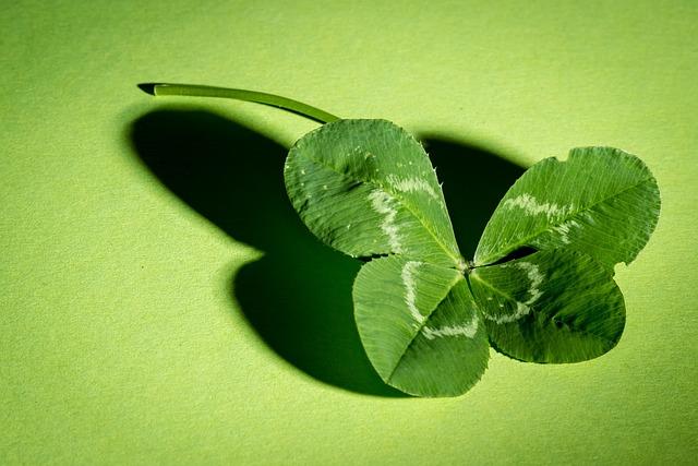 Klee, Four Leaf Clover, Green, Vierblättrig