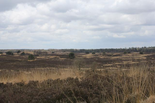 Vierhouten, Heide, Veluwe