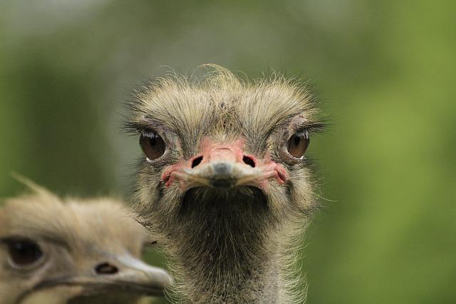 Bouquet, View, Animal, Bird, Nature, Portrait, Ostrich