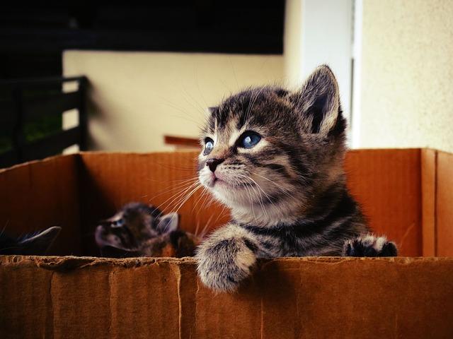 Baby Cat, Sweet, Pet, View, Domestic Cat
