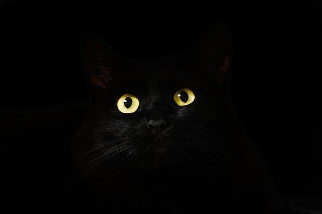 Cat Eyes, Cat, Black, View, Looking, Gaze, Staring