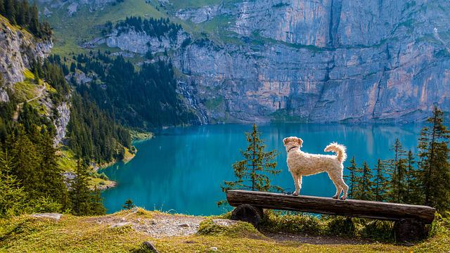 View, Bergsee, Bank, Dog