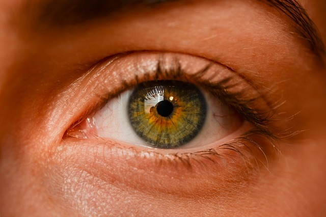 Eye, Iris, Sight, Eyebrows, Detailed, Girl, Human, View