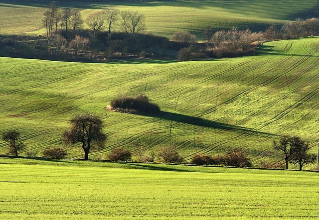 Landscape, Field, Trees, View