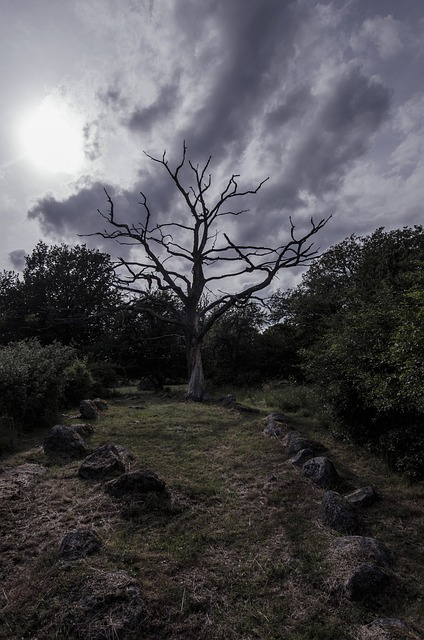 Vikings, Viking Burial, Sweden, Stones, Nature, Stone