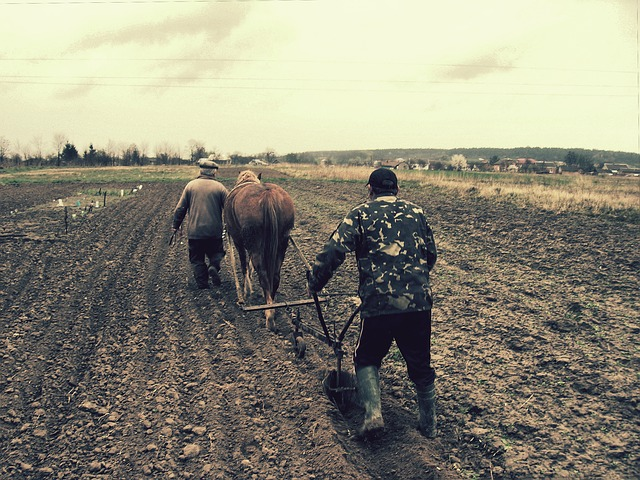 Field, Plow, Horse, Village, Vegetable Garden, Plowing