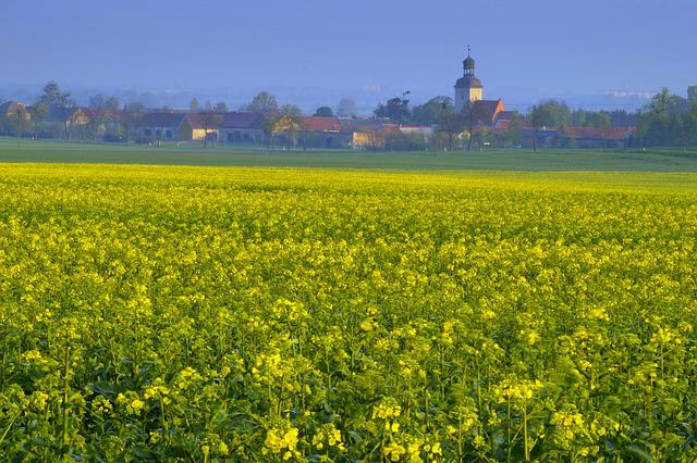 Rapeseed, Field, Agriculture, City, Village, Buildings