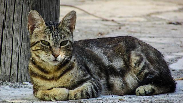 Cat, Resting, Looking, Street, Village, Cyprus, Relax