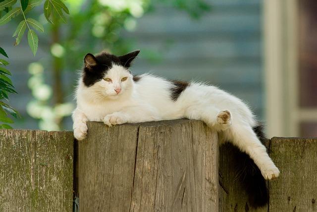 Cat, Village, Portrait, Animals, Sloth, Summer