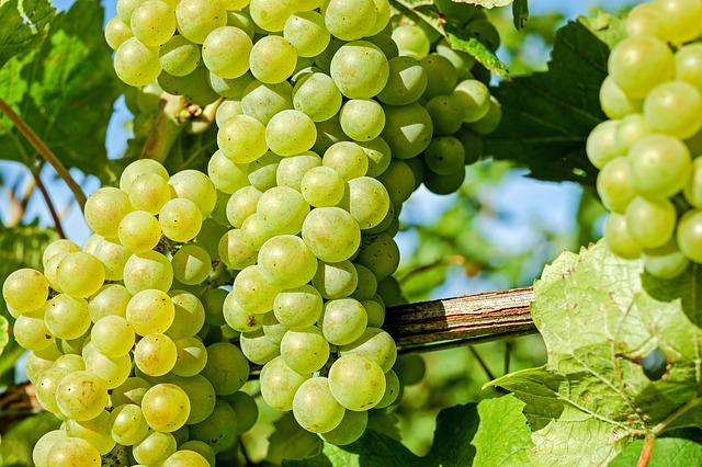 Grapes, Fruit, Winegrowing, Vine, Grapevine, Fruits