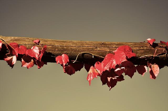 Vine, Wine Partner, Sky, Autumn, Leaf, Branch, Road