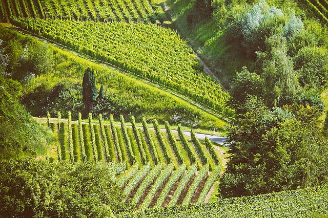 Landscape, Summer, Vines, Nature, Kaiserstuhl