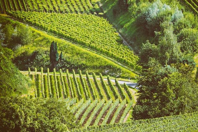 Landscape, Summer, Vines, Nature, Kaiserstuhl