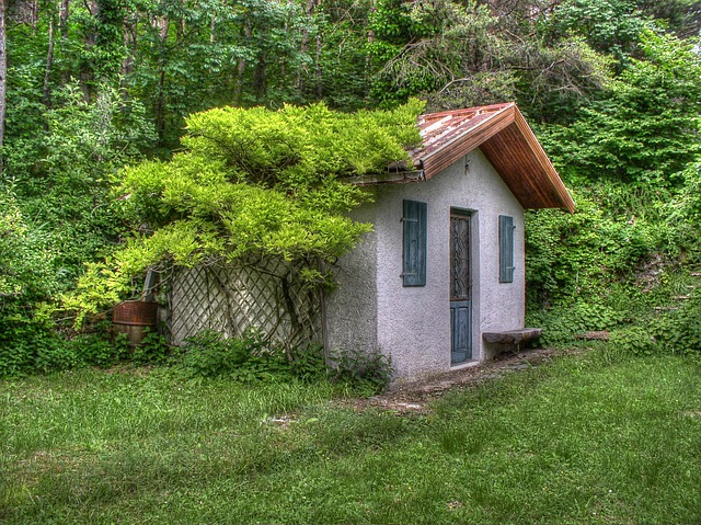 Small House, Vines, Trees, Scene