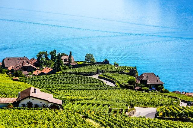 Swiss, Montreux, Vineyard