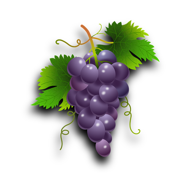 Grapes, Vine, Vineyard, Wine, Orchard, Plants, Nature