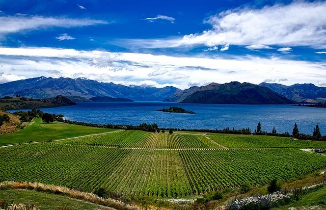 New Zealand, Vineyard, Rippon, Lake Wanaka, Vines