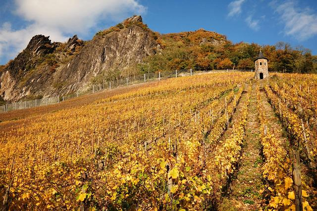 Dragon Rock, Vineyard, Siebengebirge, Autumn, Tower