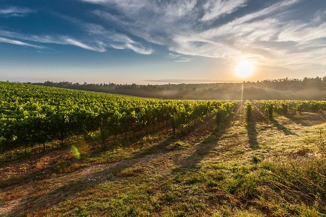 Vineyard, Farm, Sunrise, Sun, Sunlight, Morning
