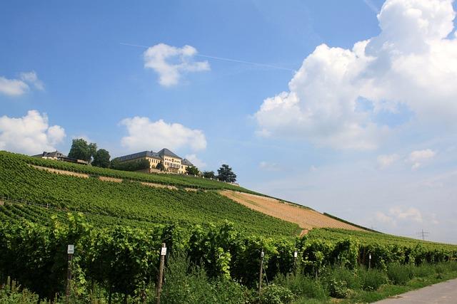 Schloss Johannisberg, Vineyard, Vines, Winegrowing