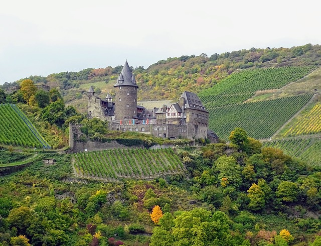 Mosel, Castle, Vineyards, Nature, Autumn
